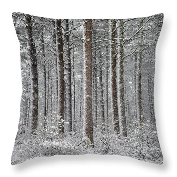 Peace in the Woods Throw Pillow by Catherine Reusch  Daley