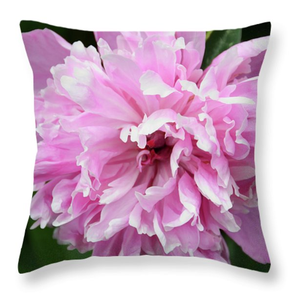 Peony Perfection Throw Pillow by Angelina Vick