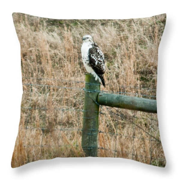 Perched Hawk Throw Pillow by Douglas Barnett