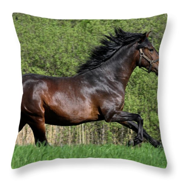 Peruvian Paso Throw Pillow by Michael Mogensen