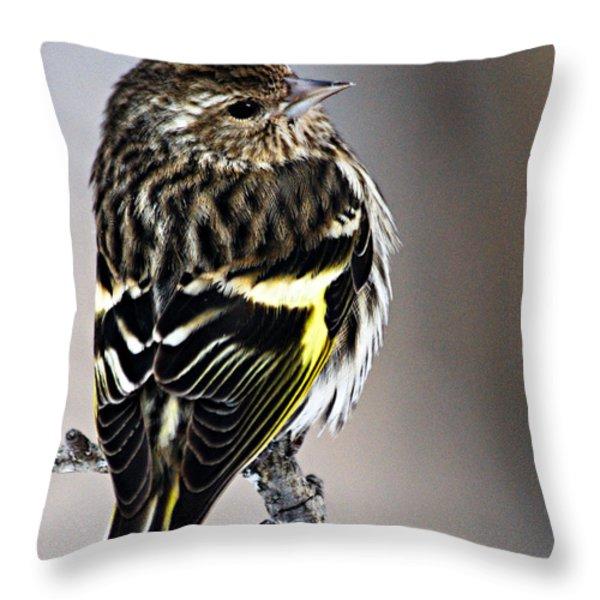 Pine Siskin Throw Pillow by Larry Ricker