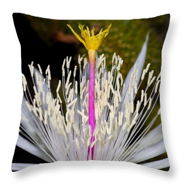 Pink and Yellow Pistil Throw Pillow by Kelley King