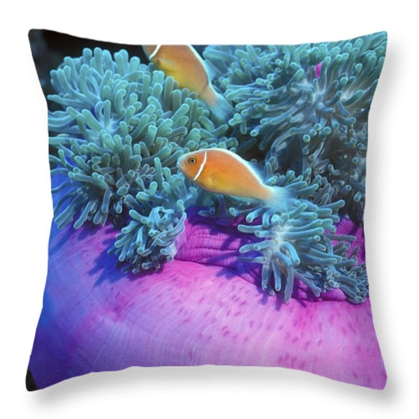Pink Anemonefish Protect Their Purple Throw Pillow by Michael Wood