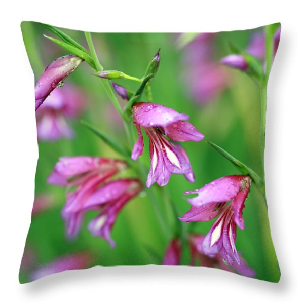 Pink Flowers Of Gladiolus Communis Throw Pillow by Frank Tschakert