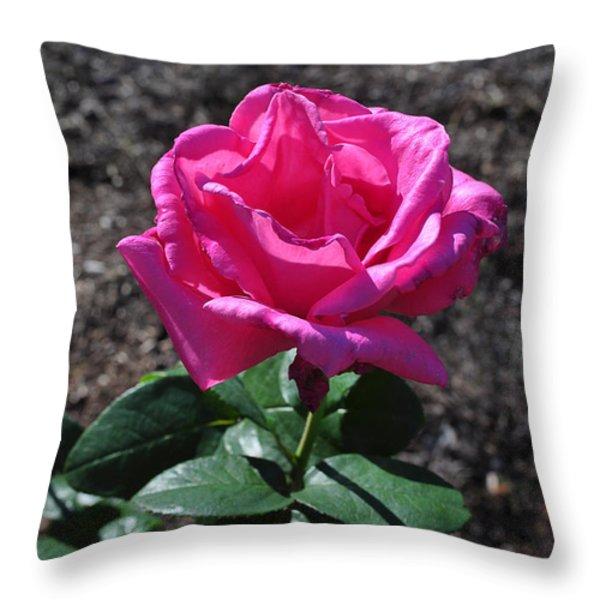 Pink Rose Throw Pillow by Luke Moore