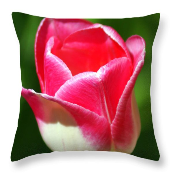 Pink Tulip Throw Pillow by Marty Koch