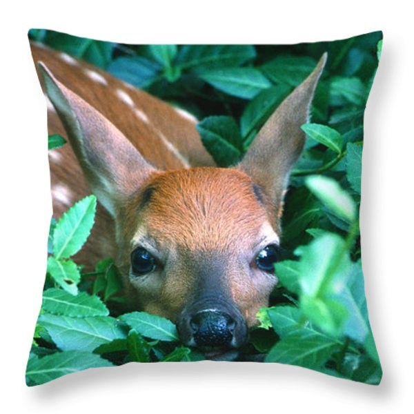 Playing Peekaboo Throw Pillow by Sandra Bronstein
