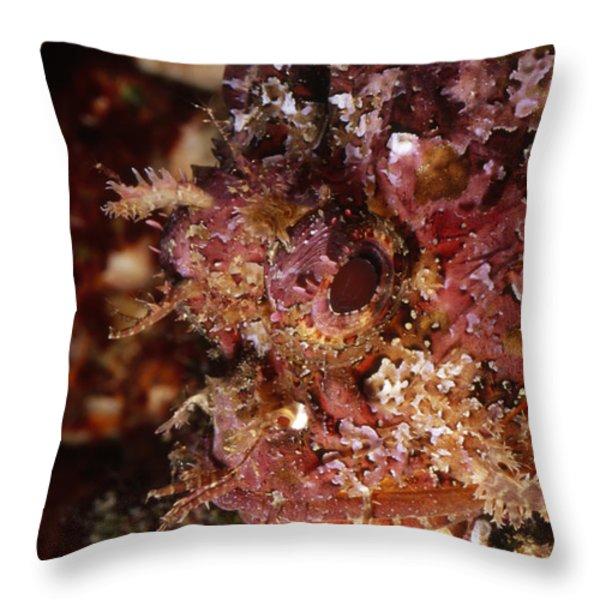Poisnous Stone Fish, Scorpaena Mystes Throw Pillow by James Forte