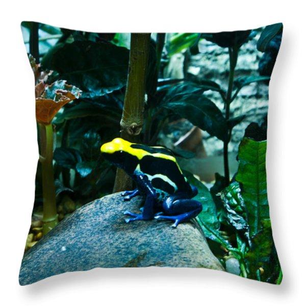 Poison Dart Frog Poised For Leap Throw Pillow by Douglas Barnett