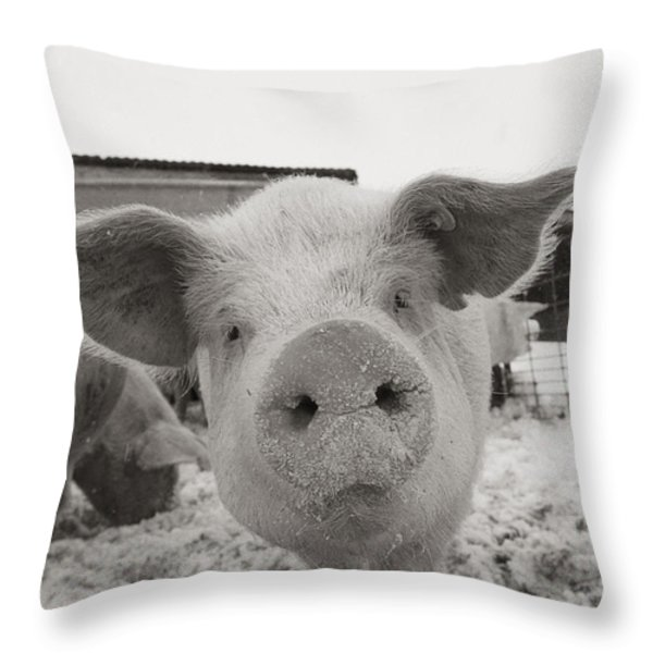 Portrait Of A Young Pig. Property Throw Pillow by Joel Sartore