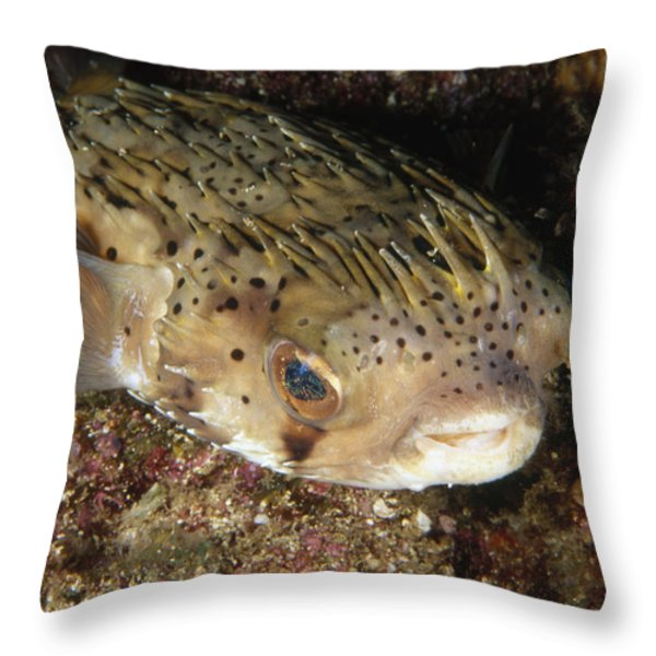 Porupinefish Close-up Portrait Sleeping Throw Pillow by James Forte