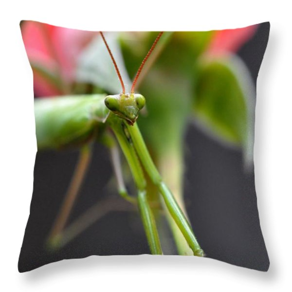 Praying Mantis 3 Throw Pillow by Noah Cole