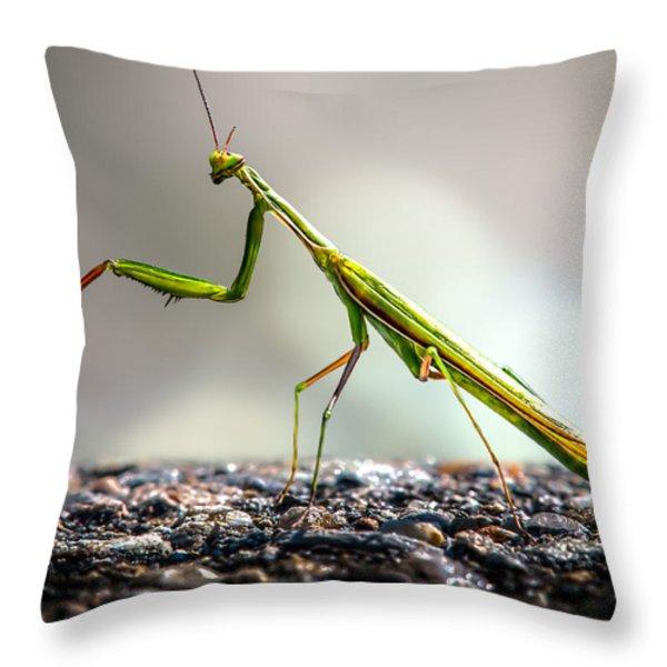 Praying Mantis Throw Pillow by Bob Orsillo