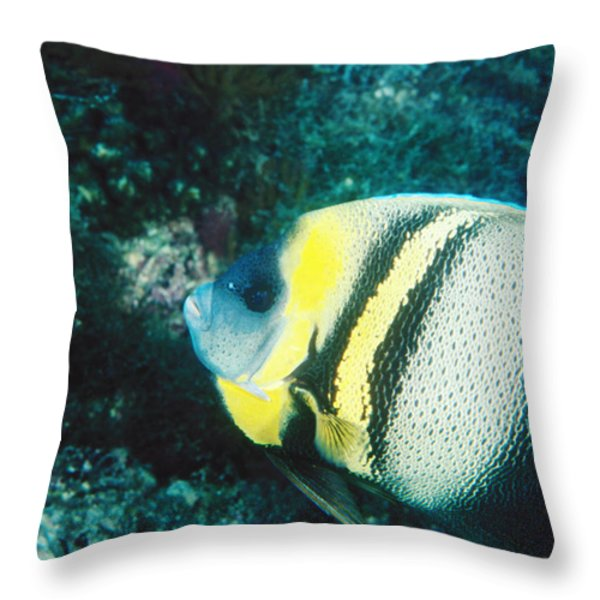 Profile Of A Cortez Angelfish Throw Pillow by James Forte