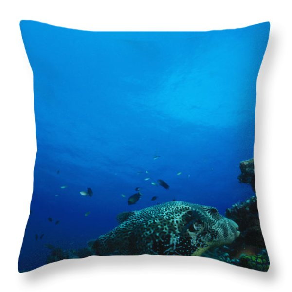 Pufferfish On Coral Reef Throw Pillow by James Forte