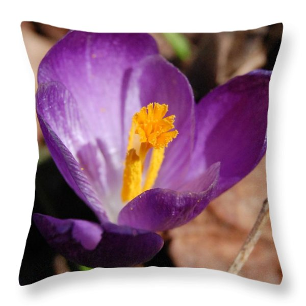 Purple Crocus Throw Pillow by David Lane