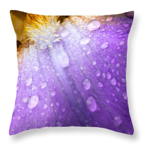 Rain Covered Iris Throw Pillow by Amanda Kiplinger