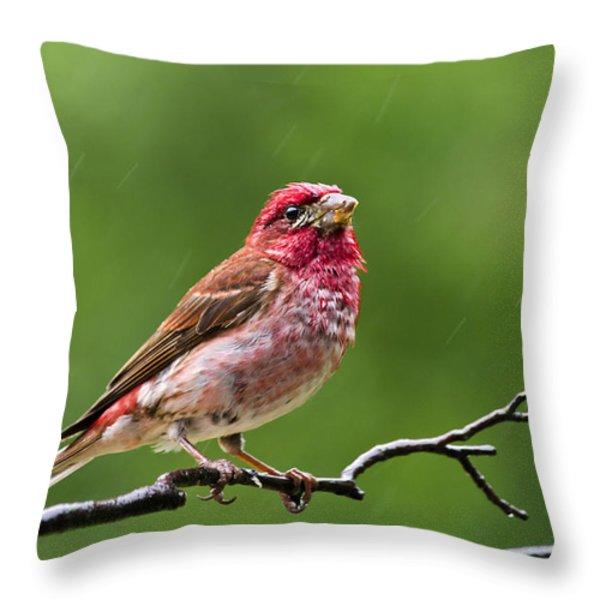 Rainy Day Bird - Purple Finch Throw Pillow by Christina Rollo