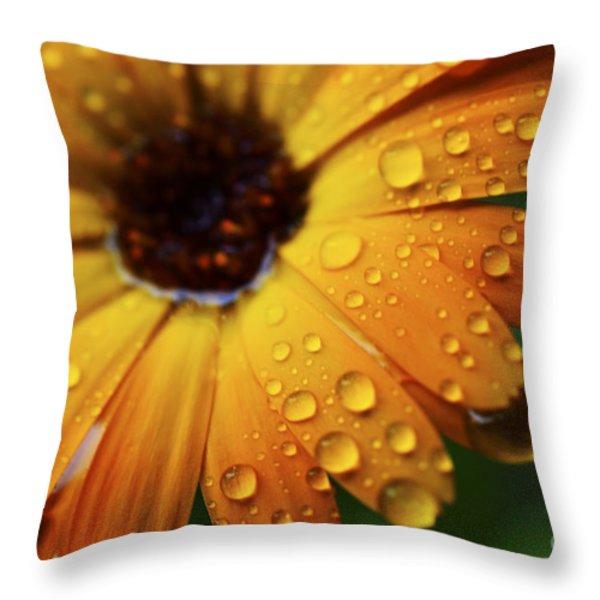 Rainy Day Daisy Throw Pillow by Thomas R Fletcher