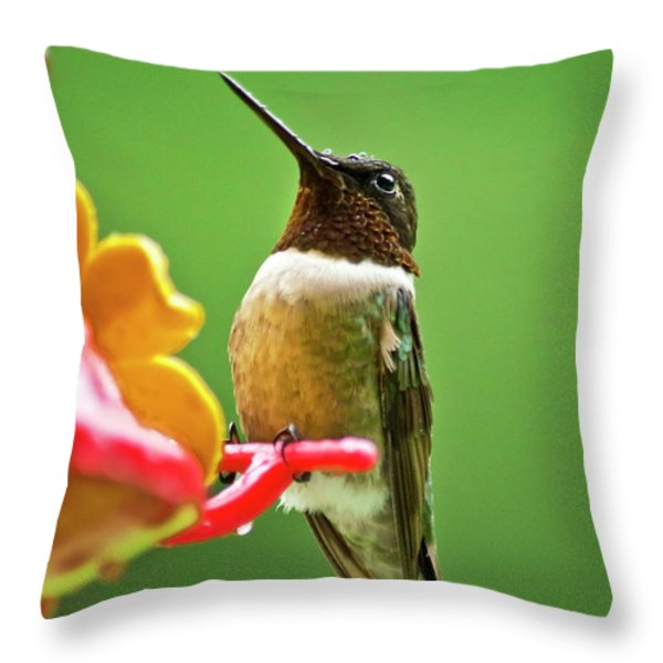 Rainy Day Hummingbird Throw Pillow by Christina Rollo