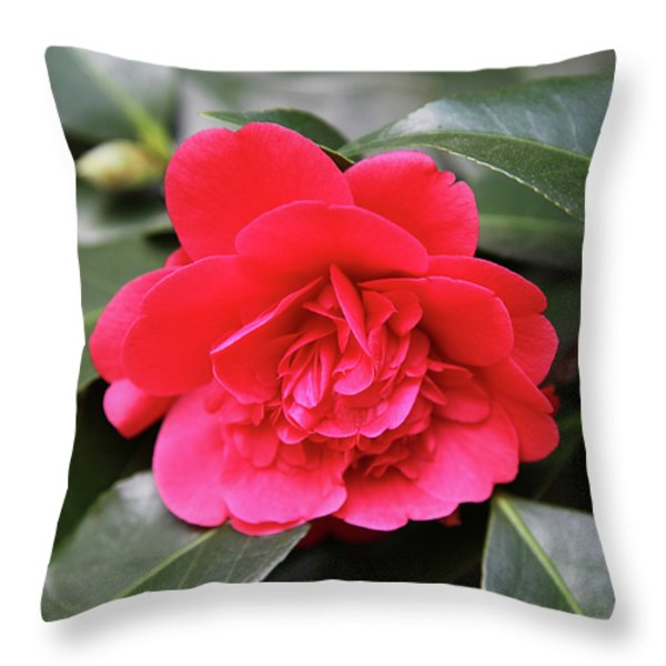 Red Camellia Throw Pillow by Dean  Triolo