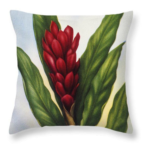 Red Ginger Throw Pillow by Hawaiian Legacy Archive - Printscapes