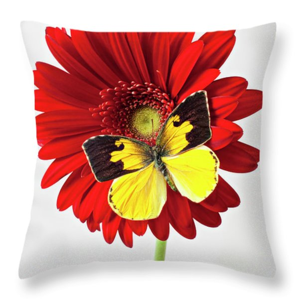 Red mum with Dogface butterfly Throw Pillow by Garry Gay