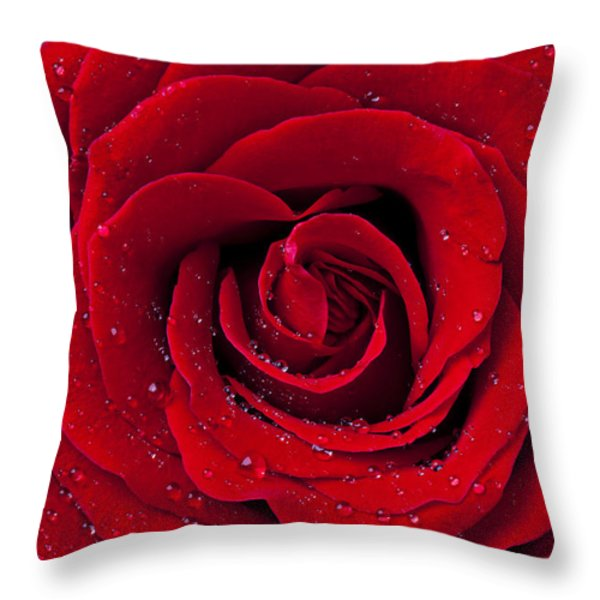 Red Rose With Dew Throw Pillow by Garry Gay