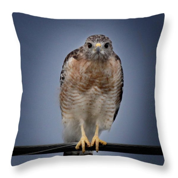 Red Shoulder Hawk Throw Pillow by Joseph G Holland