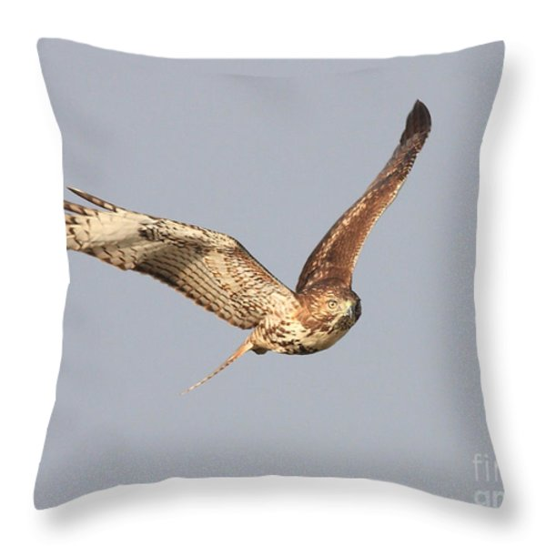Red Tailed Hawk - 20100101-7 Throw Pillow by Wingsdomain Art and Photography