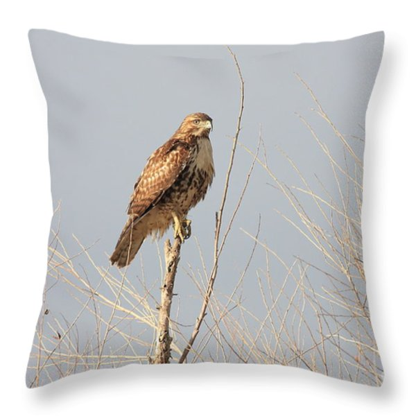 Red Tailed Hawk 20100101-5 Throw Pillow by Wingsdomain Art and Photography