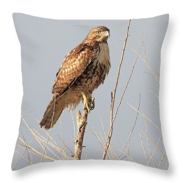 Red-tailed Hawk . 40d11323 Throw Pillow by Wingsdomain Art and Photography