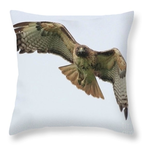 Red Tailed Hawk Finds Its Prey Throw Pillow by Wingsdomain Art and Photography