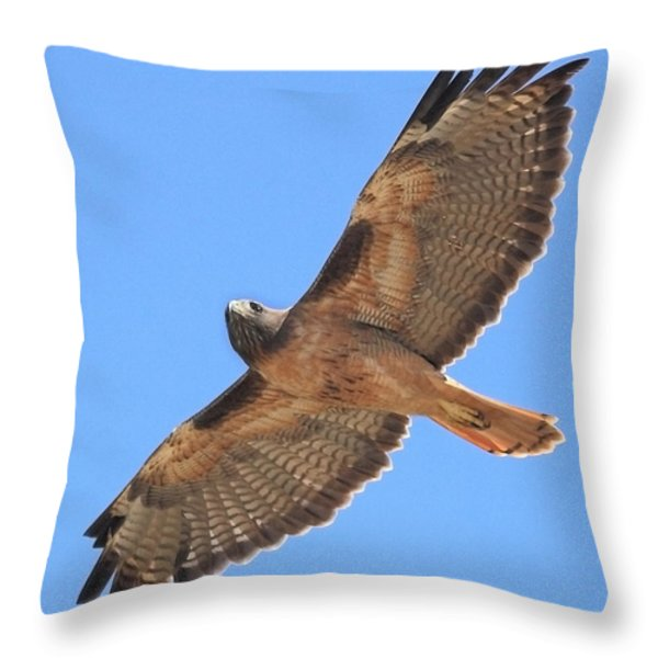 Red Tailed Hawk in flight Throw Pillow by Wingsdomain Art and Photography