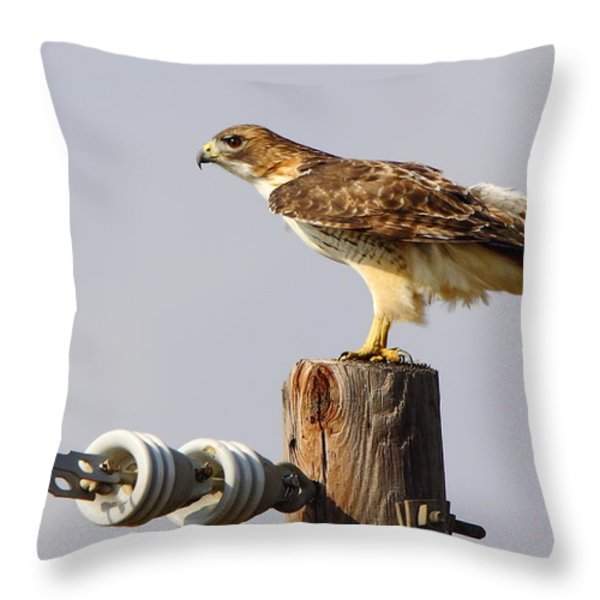 Red Tailed Hawk Perched Throw Pillow by Robert Frederick