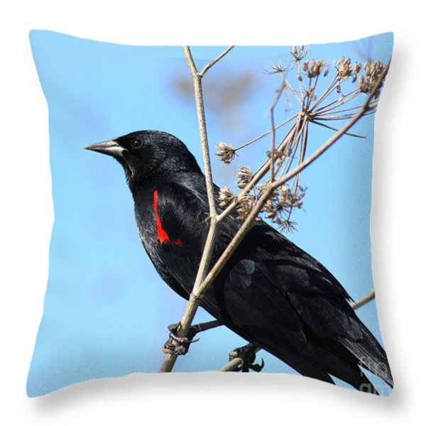 Red-winged Blackbird . 40d5718 Throw Pillow by Wingsdomain Art and Photography