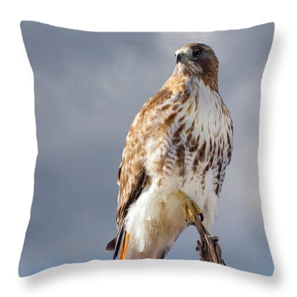 Redtail Portrait Throw Pillow by Bill  Wakeley