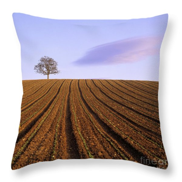 Remote Tree In A Ploughed Field Throw Pillow by Bernard Jaubert