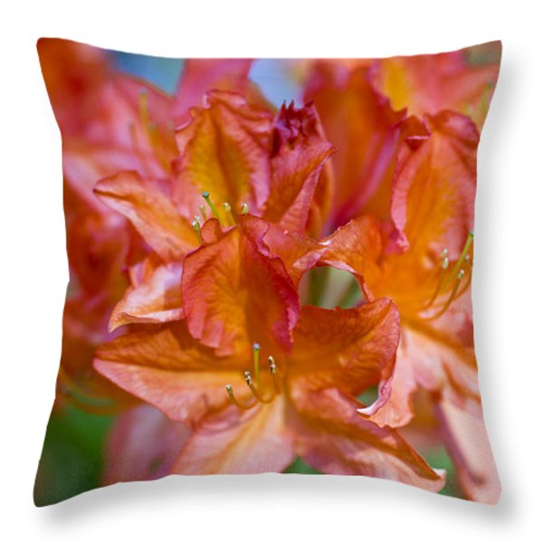 Rhododendron Flowers Throw Pillow by Frank Tschakert