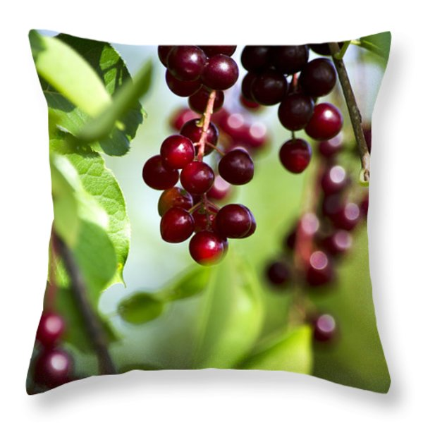 Ripe Red Cherries Jubilee Throw Pillow by Christina Rollo