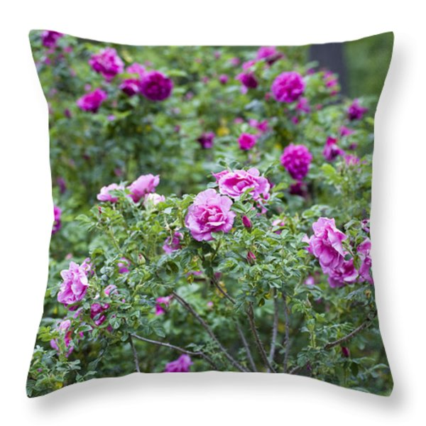Rose Garden Throw Pillow by Frank Tschakert