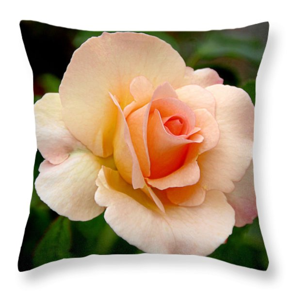 Rose is a Rose is a Rose Throw Pillow by Christine Till