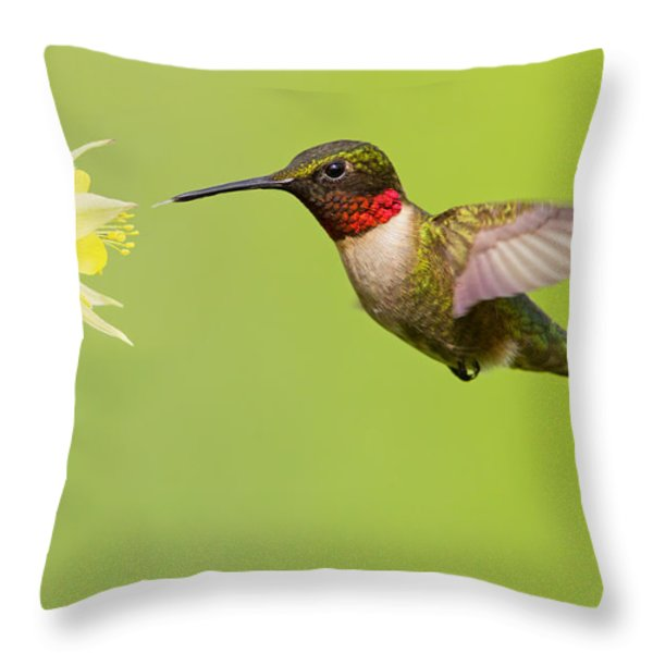 Ruby-Throated Hummingbird Throw Pillow by Mircea Costina Photography