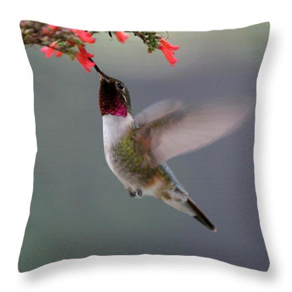 Ruby Throated Hummingbird Throw Pillow by Sabrina L Ryan