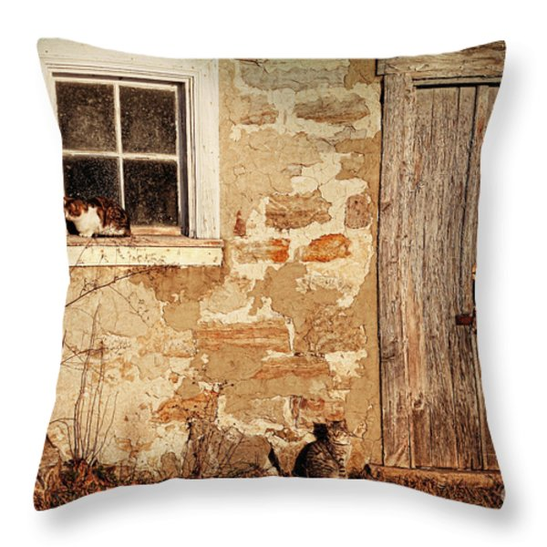 Rural Barn With Cats Laying In The Sun  Throw Pillow by Sandra Cunningham