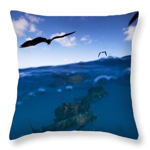 Sailfish And Frigate Birds Hunt Throw Pillow by Paul Nicklen