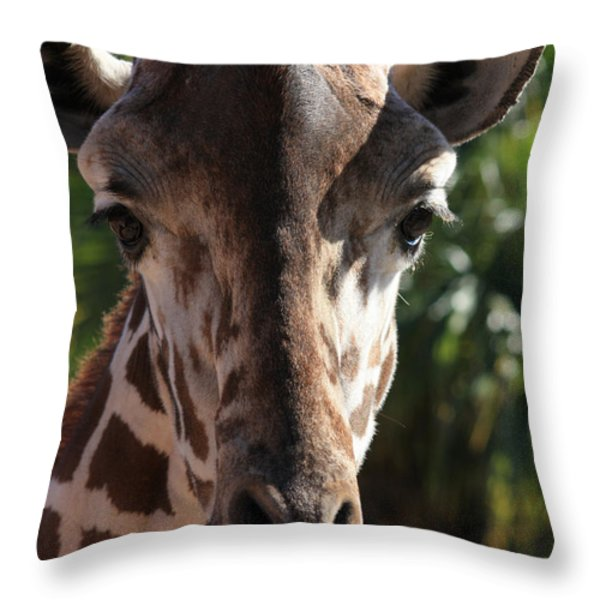 Say Cheese Card Throw Pillow by Carol Groenen
