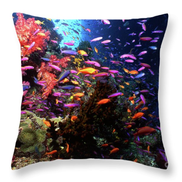 Scalefin Anthias Fish In Coral Garden Throw Pillow by Beverly Factor