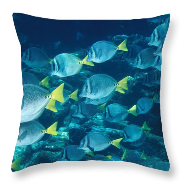 School Of Surgeonfish Cruising Reef Throw Pillow by James Forte