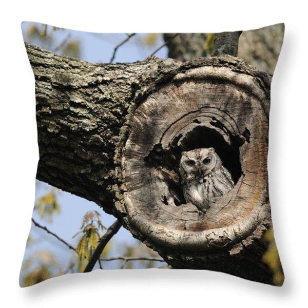 Screech Owl In A Tree Hollow Throw Pillow by Darlyne A. Murawski